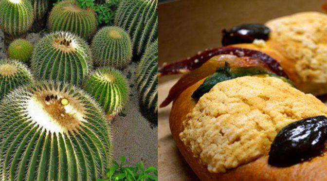 La rosca de Reyes está exterminado cactus mexicano que tarda 40 años en crecer (ElBigData)