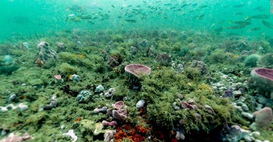 EUA: Los océanos se calientan a la misma tasa que si a 5 bombas de Hiroshima se arrojaran cada segundo (CNN)