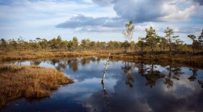 EE.UU.: Trump termina con protección a cuerpos de agua pequeños y medianos (Cambio)