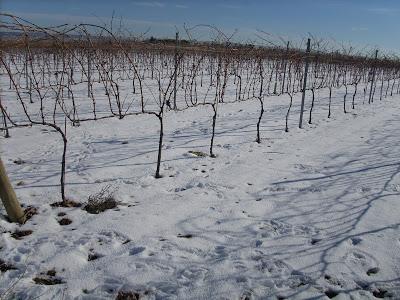 España: Satisfacción en el campo por las lluvias e incertidumbre en zonas con heladas (Información)