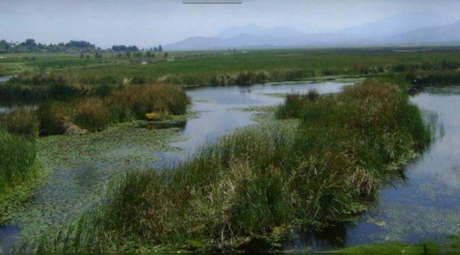 Michoacán: Urge proteger y conservar el humedal sur de Pátzcuaro, que produce una cuarta parte de toda el agua en la zona: INIRENA (90º grados)