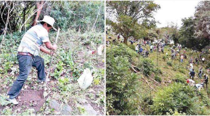 Veracruz: Campesinos de Tepetzintla reforestan para evitar se seque manantial (Vanguardia)
