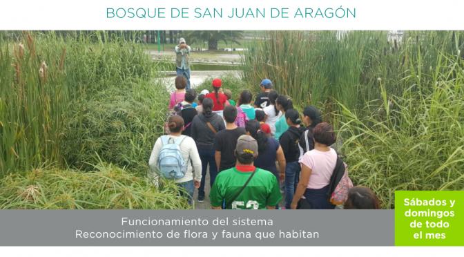 Recorrido Humedal- Bosque de San Juan de Aragón