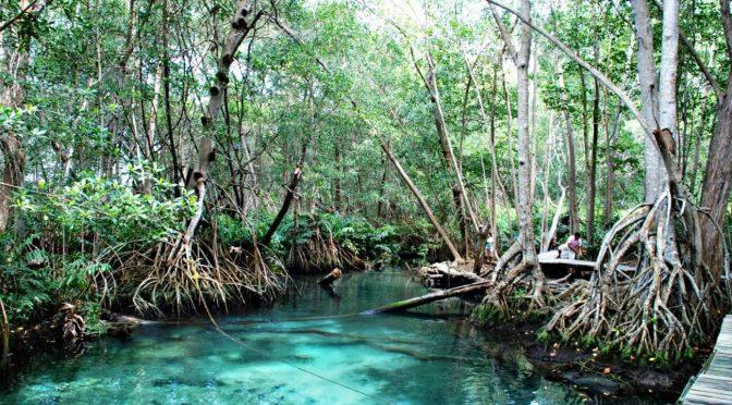 Campeche: buscan el reconocimiento de los humedales de Calakmul (Tribuna)