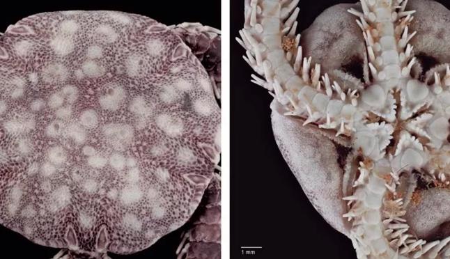 CDMX: Científicos de la UNAM descubren una nueva especie marina en Cozumel (El Universal)