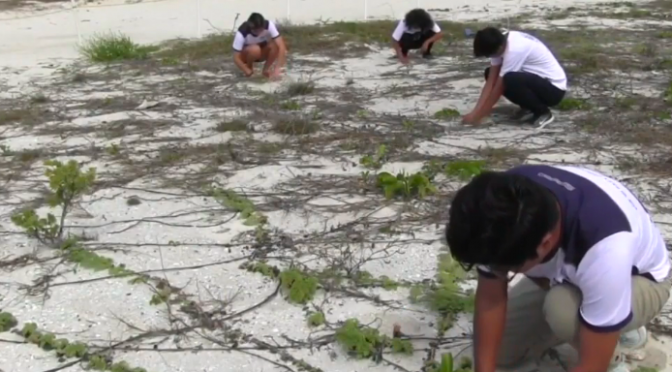 Yucatán: Estudiantes de la UNAM logran restaurar manglar con germinación (Noticieros Televisa)