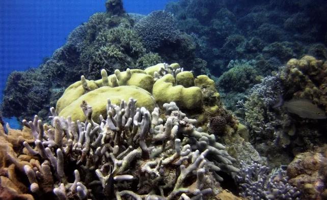 """Europa: El futuro de los arrecifes para 2100 es """"sombrío"""", pueden quedarse sin hábitats (El Universal)"""