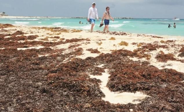Quintana Roo: Sargazo que llega tiene 28 metales pesados: Investigación (El Universal)