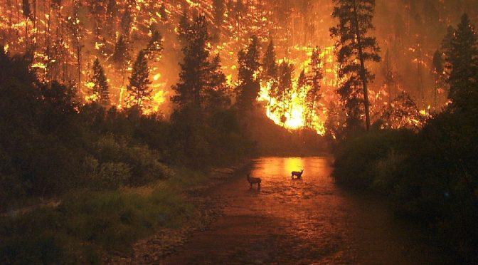 Grandes incendios contaminan la infraestructura hídrica (El Siglo de Coahuila)