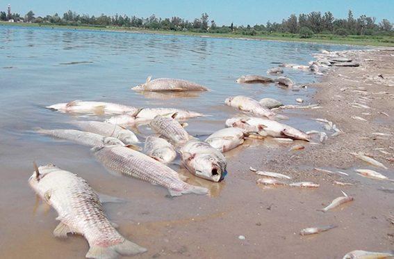 Veracruz: pescadores confían en CONAGUA (El Heraldo de Martínez)