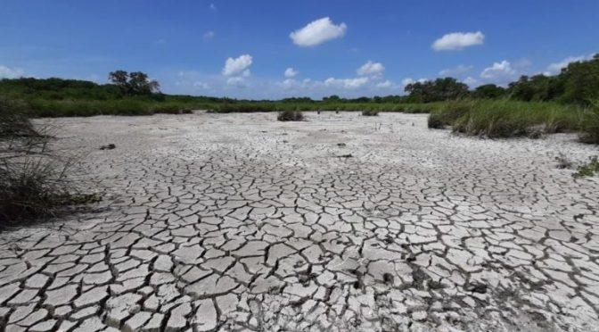 Estados Unidos: ¿Sentiste calor a principios de año? Este enero fue el más caluroso desde que se tiene registro (El Financiero)