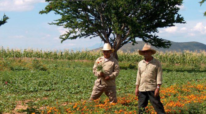 Campesinos tlaxcaltecas no utilizan agua pluvial (El Sol de Tlaxcala)