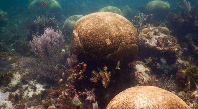México: Expertos advierten que Arrecife Mesoamericano se deteriora rápidamente (Pulso)