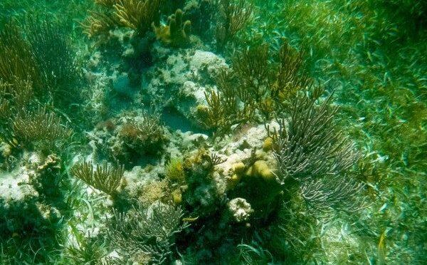 Quintana Roo en emergencia ambiental: Centinelas del Agua (Diario de Yucatán)