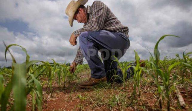 Chiapas: Productores modifican temporada de siembra (Cuarto Poder)