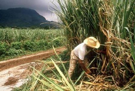 Sequía sigue afectando el campo cañero de Veracruz: Ángel Gómez