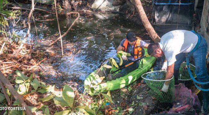 Querétaro: realizan limpieza de Cenote en la Sma 68 como parte de las acciones en Pro del Medio Ambiente (Radio Formula)
