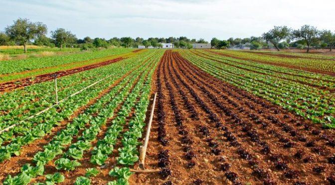 Brasil: Sistema natural para el tratamiento de aguas residuales (Ambientum)