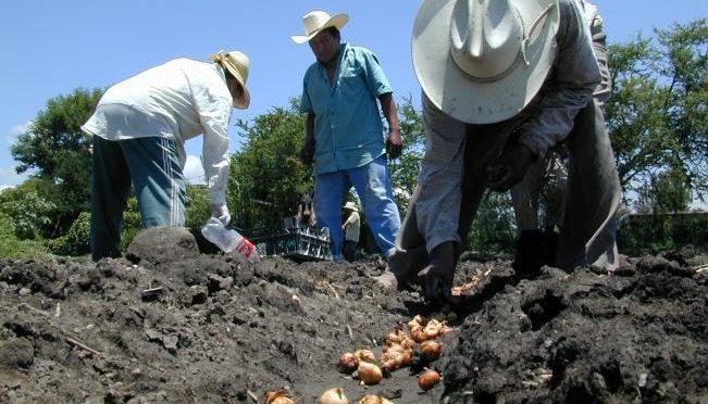 Querétaro: Por sequía, se sembrará sólo 50% de tierras en el estado (El Universal)