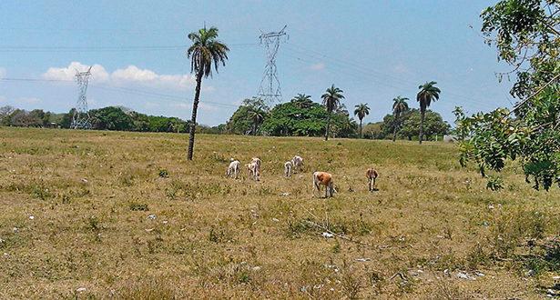 Tamaulipas: Alertan año de sequía para mayor parte del estado (Inforural)