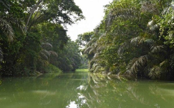 México: Manglares y pastos marinos ayudarían a países a incrementar su ambición climática (EcoCienciaGT)