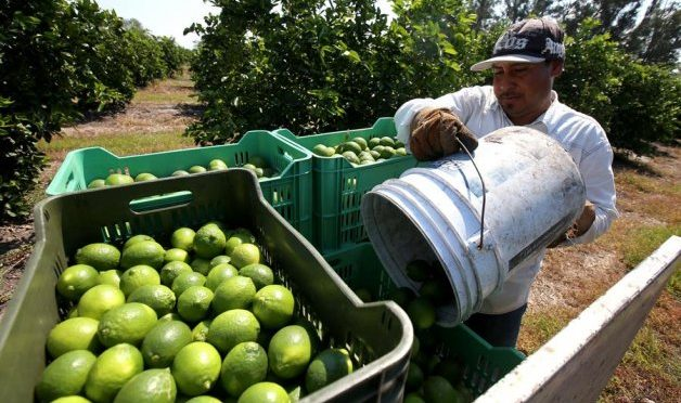 Los agricultores del estado mexicano de Chihuahua rechazan trasvase de presas (Efeagro)