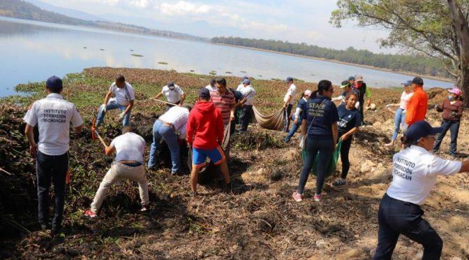 Michoacán: han liberado de lirio 6 hectáreas de presa de Cointzio (Quadratín)