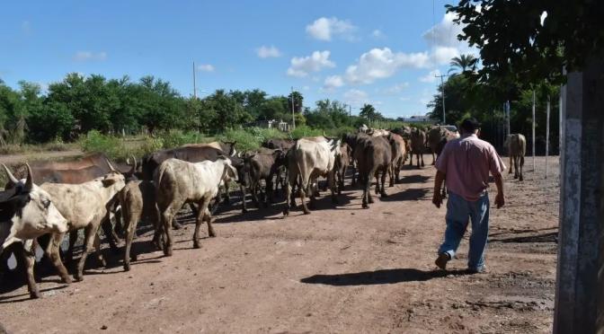 Sinaloa: Prevén escasez de agua y pastura durante este año en municipio muy secos (Debate)