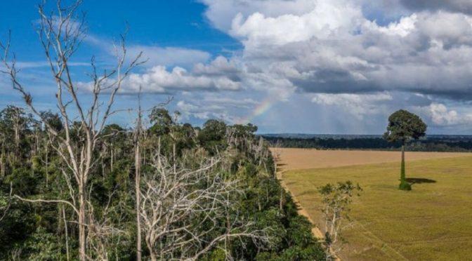 Cambio climático transformará en 50 años a la selva de la Amazonía en sábana (La Verdad)