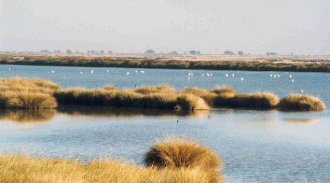 España: Contaminación por nitratos en aguas superficiales de Doñana (Ambientum)