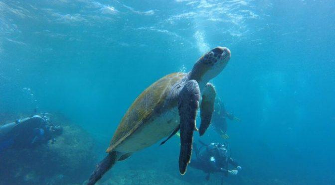 España: El olor del plástico atrae a las tortugas marinas (Foro del Agua)