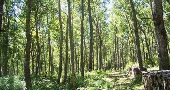 Estudio de la ONU sobre la relación del agua con la masa forestal exige una política nacional de investigación en Chile (Foro del Agua)