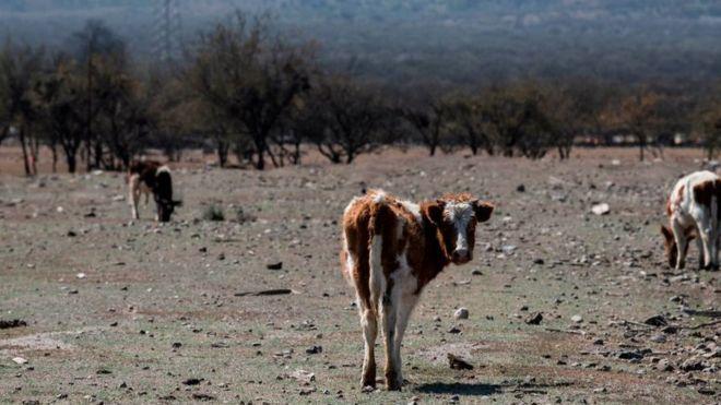 Megasequía en Chile: la disputa por la propiedad del agua en medio de la mayor sequía de la que se tiene registro (BBC)