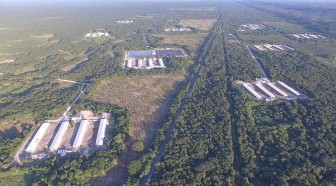 Espacios naturales ocupados y agua contaminada: las irregularidades de las granjas porcícolas en Yucatán (Animal Político)