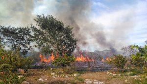 Incendios que siembran la deforestación en la Península de Yucatán (Animal Político)
