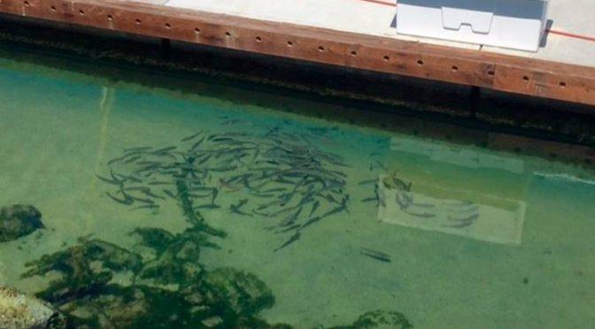 Baja California: Transparente el agua de Los Cabos tras la cuarentena (El Sudcaliforniano)