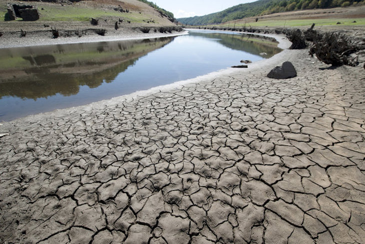 Las plantas deben racionar su uso del agua en las sequías… ¿cómo? (Ecoticias)