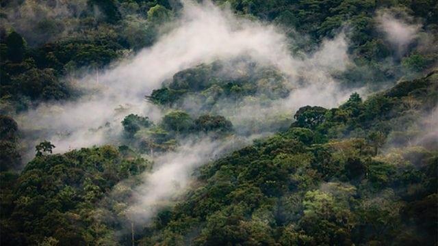El agua y los ecosistemas: una relación vital