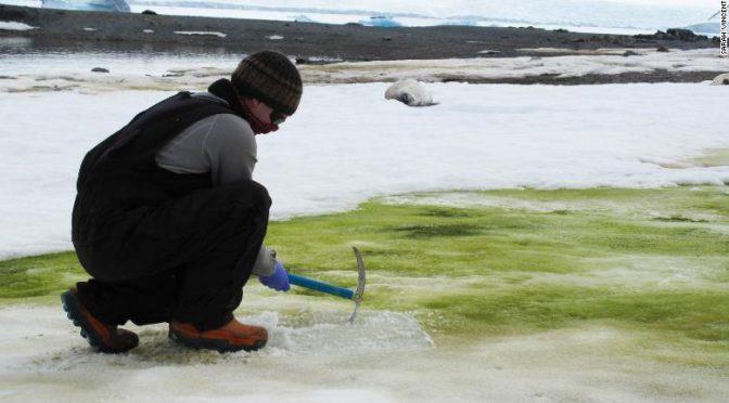 La nieve se está volviendo verde en la Antártida (y el cambio climático lo empeorará) (CNN)