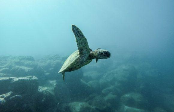 ¿Por qué se celebra hoy el Día Mundial de los Océanos? (El País)