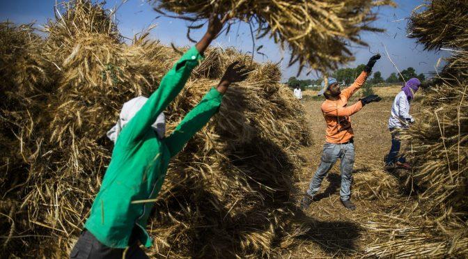 Crisis de agua empuja a agricultores de la India a nuevos cultivos (Bloomberg)