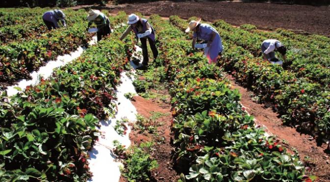 Chile: Proponen cinco medidas para abordar la crisis del agua en la reactivación sostenible (Portal Frutícola)