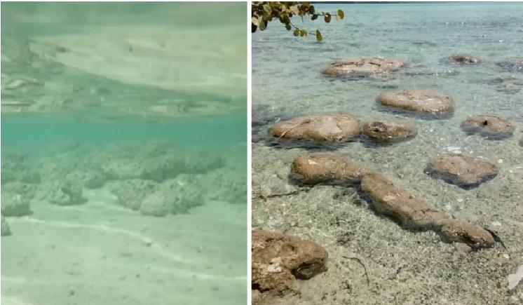 Quintana Roo: Laguna de Bacalar está perdiendo el esplendor de sus 7 tonalidades, revela estudio de la UNAM. (elfinanciero.com.mx)