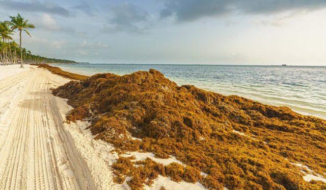México: Alarma la presencia de sargazo en la zona del Caribe (La Jornada)