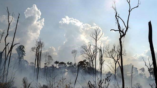 Toca mínimo deforestación global en 30 años (Reforma)