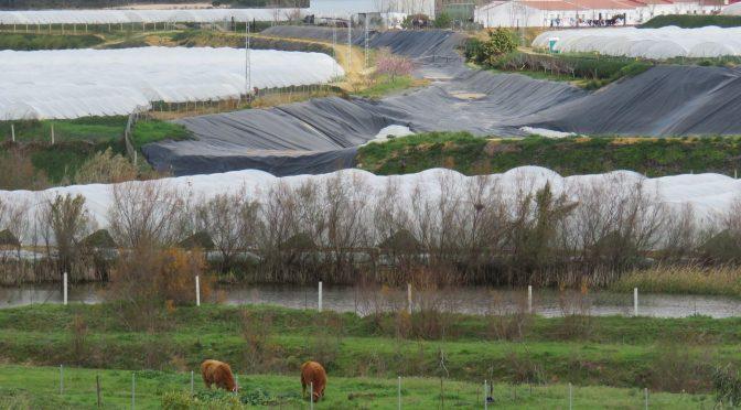España: WWF vincula la supervivencia de Doñana a la creación de un plan anual de extracciones del acuífero (El País)