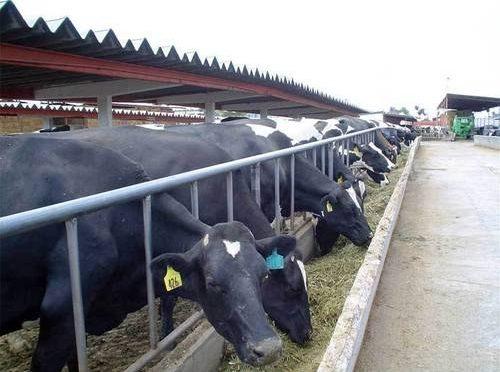 Producir un kilo de carne de cerdo requiere 12 mil litros de agua (La Jornada)