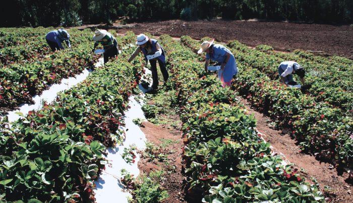 Chile: Cómo abordar la crisis del agua en una reactivación sostenible (El Mostrador)