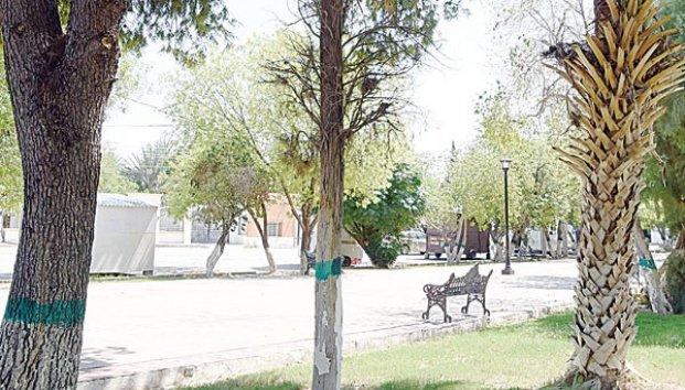Coahuila: Quitan agua rodada y matan los árboles. (Zócalo)