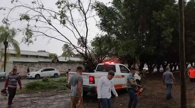 Colima: Efectos de Elida inundan Colima y dejan sin agua a tres colonias. (El Occidental)